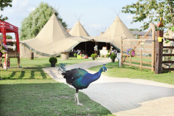 TIPI WEDDINGS & WHY WE LOVE THEM
